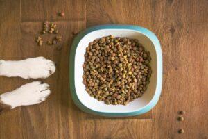 ¿Cómo cambiarle la alimentación a su mascota correctamente?