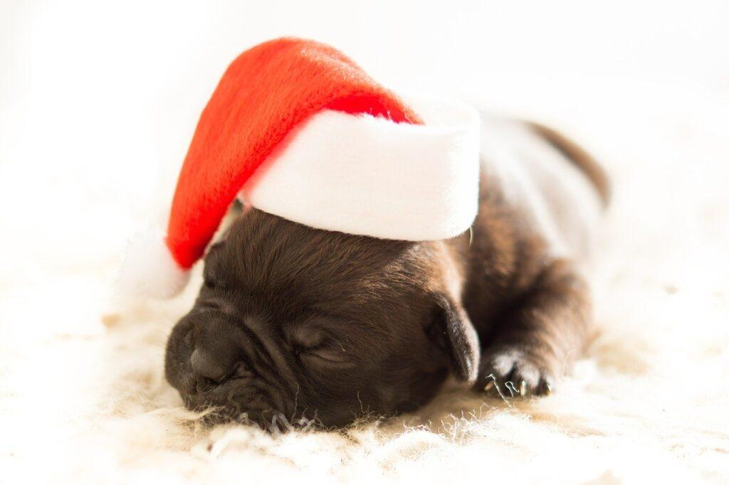En navidad, tenga cuidado con la alimentación de su mascota
