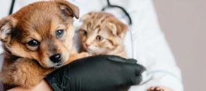 Qué-debo-tener-en-cuenta-antes-de-adoptar-una-mascota