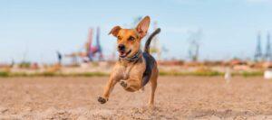 Actividad física en los animales de compañía